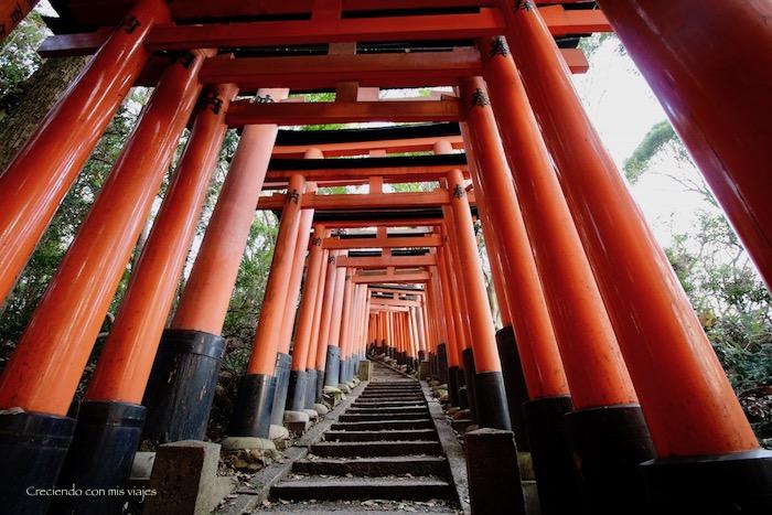 IMG 5660 - Uji, Obaku y volvemos a Fushimi Inari