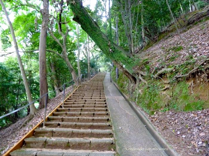 P1010274 - Palacio, Castillo y macacos en Kyoto