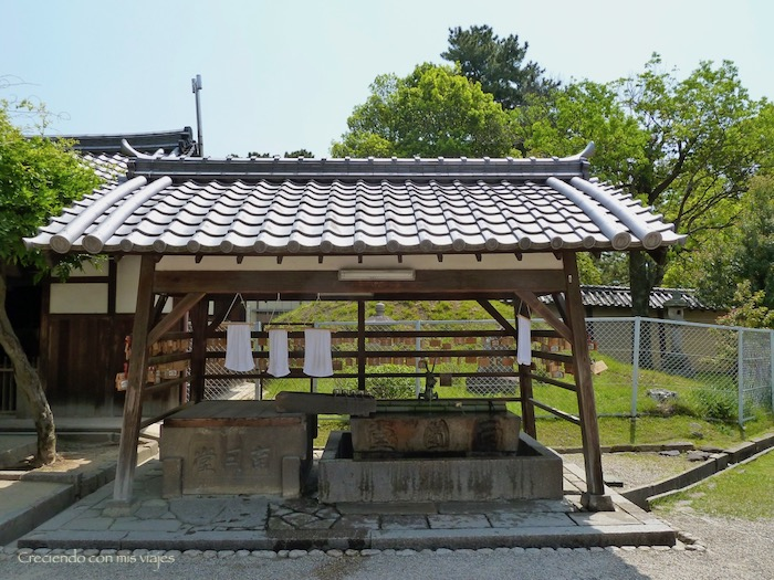 P1010326 - Vamos a conocer los ciervos de Nara