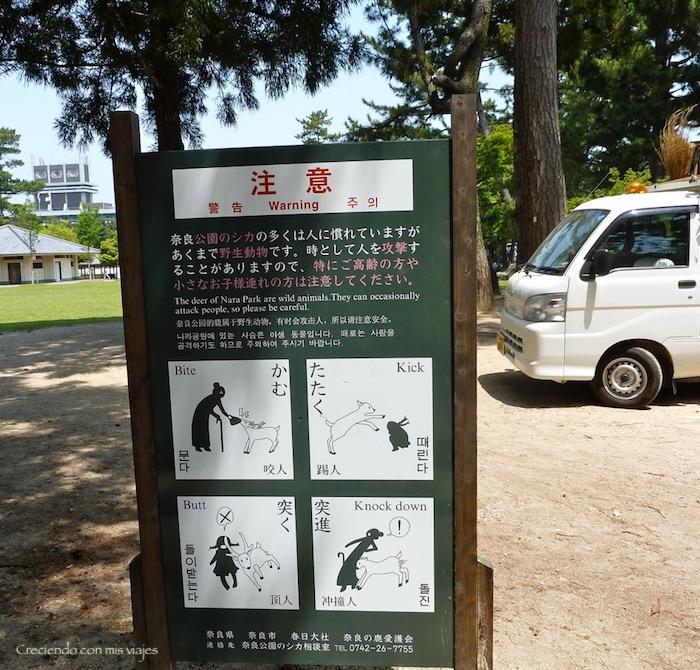 P1010345 - Vamos a conocer los ciervos de Nara
