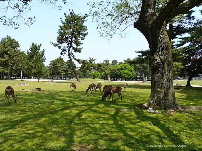 P1010349 - Vamos a conocer los ciervos de Nara
