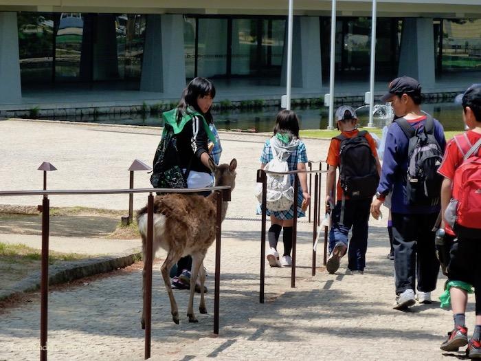 P1010355 - Vamos a conocer los ciervos de Nara