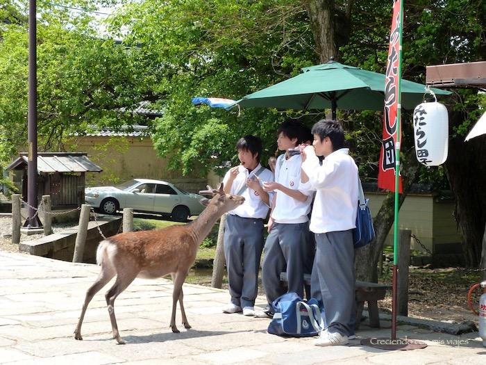 P1010359 - Vamos a conocer los ciervos de Nara