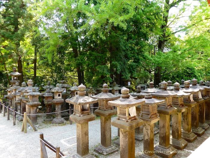 P1010491 - Vamos a conocer los ciervos de Nara