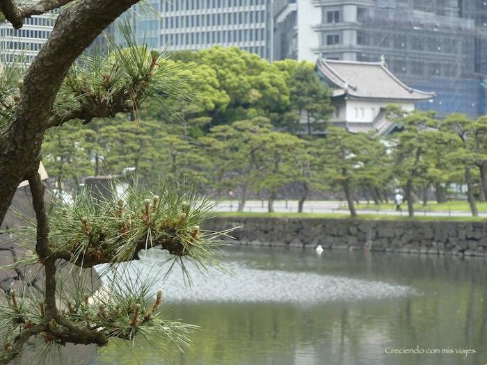 P1020508 - Palacio Imperial de Tokyo y Shinjuku