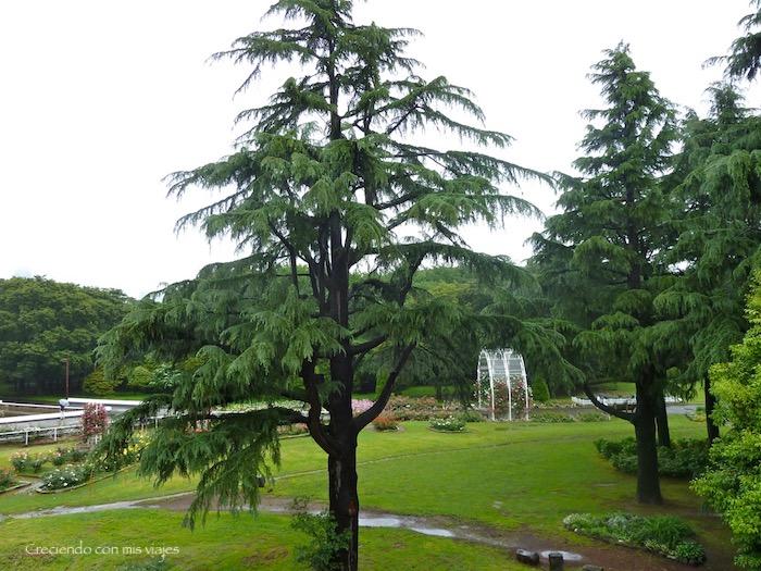 P1020984 - Shibuya, Yoyogi Park e Ikebukuro