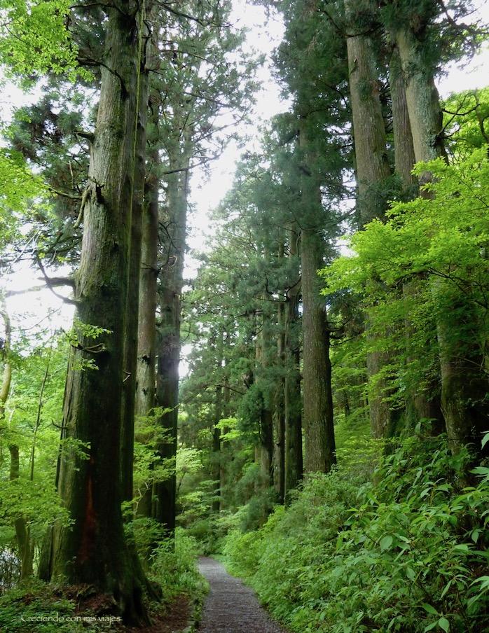P1030124 - ¡disfrutamos del onsen privado en Hakone!
