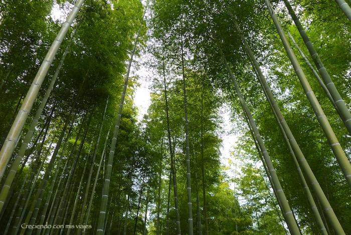P1080229 - Entre bosques de bambú en Arashiyama
