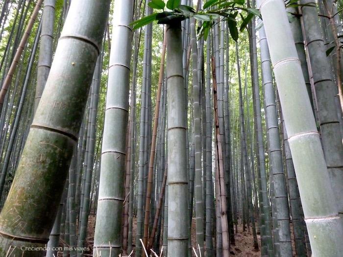 P1080329 - Entre bosques de bambú en Arashiyama