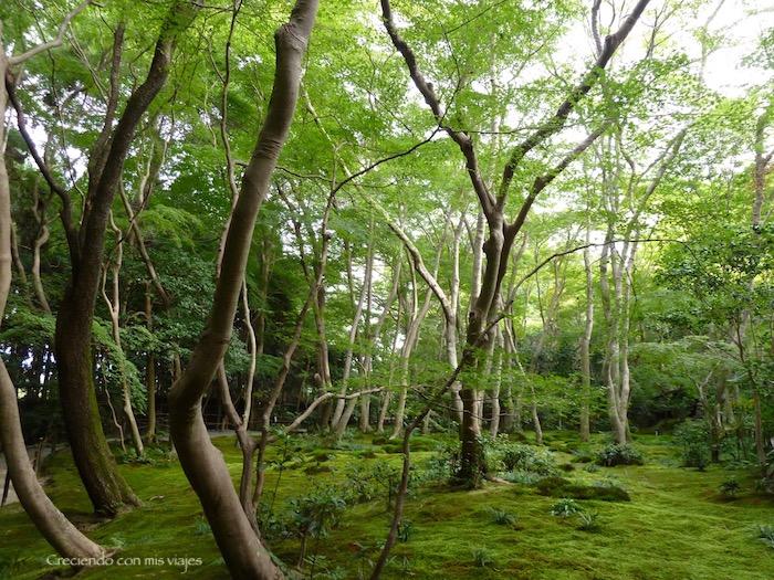 P1080332 - Entre bosques de bambú en Arashiyama