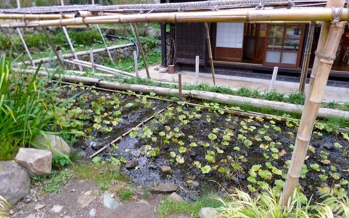 P1090483 - Recorremos la falda del Mt. Fuji