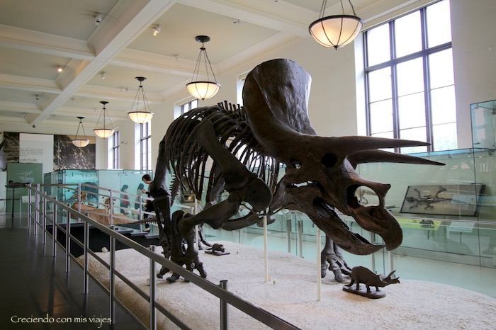 IMG 7673 - Museo Historia Natural, Roosevelt y compras