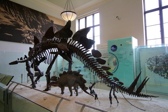 IMG 7674 - Museo Historia Natural, Roosevelt y compras