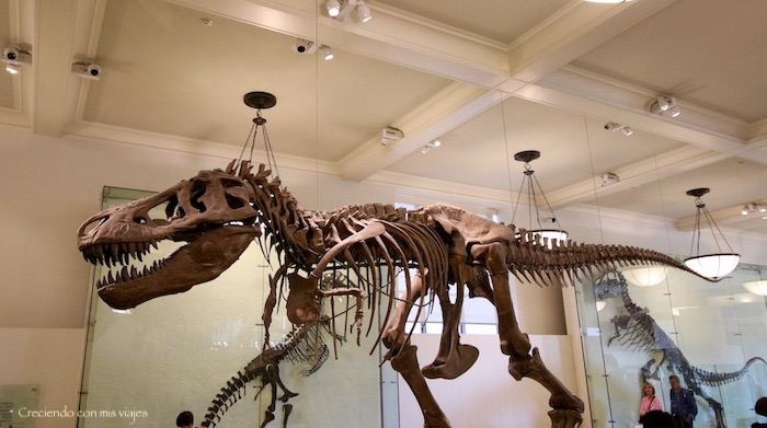 IMG 7678 - Museo Historia Natural, Roosevelt y compras