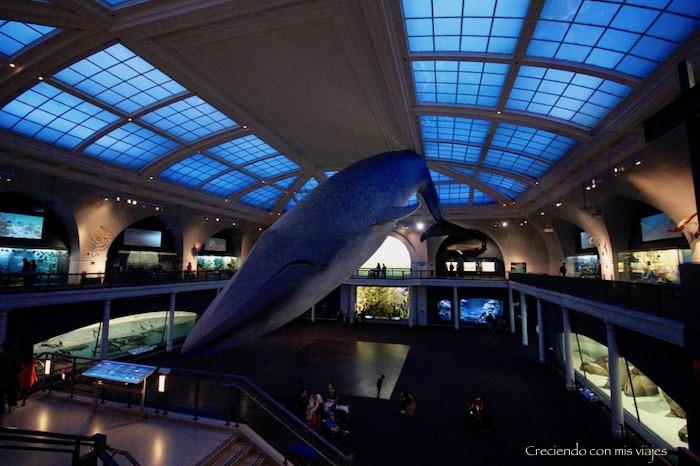 IMG 7687 - Museo Historia Natural, Roosevelt y compras