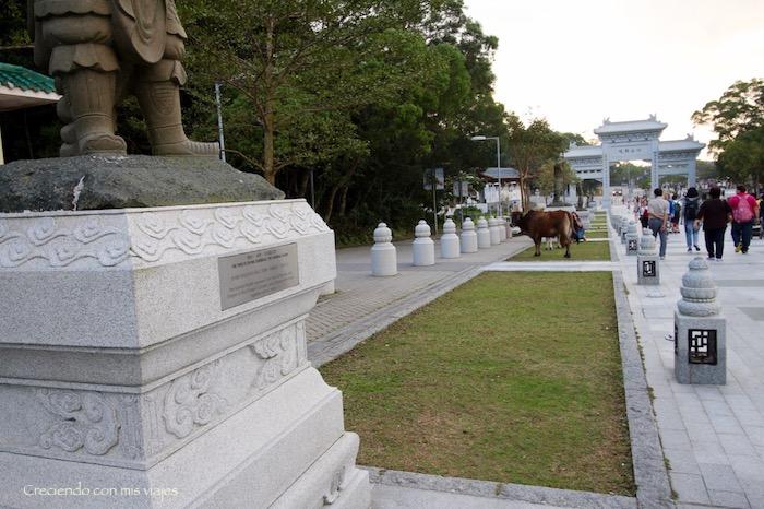 IMG 9209 - Isla de Lantau