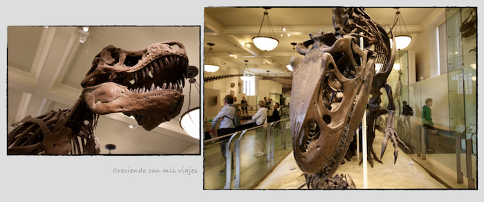 T Rex - Museo Historia Natural, Roosevelt y compras