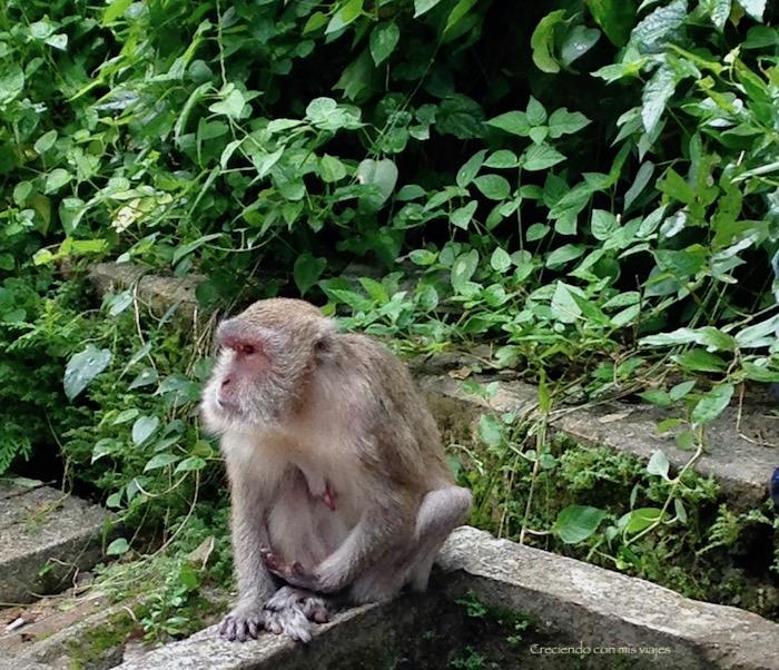 IMG 0326 - Ao Phang-Nga National Park