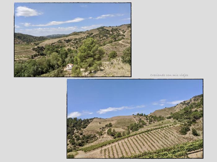 vistas viñedos Priorat - Cartoixa d'Escaladei